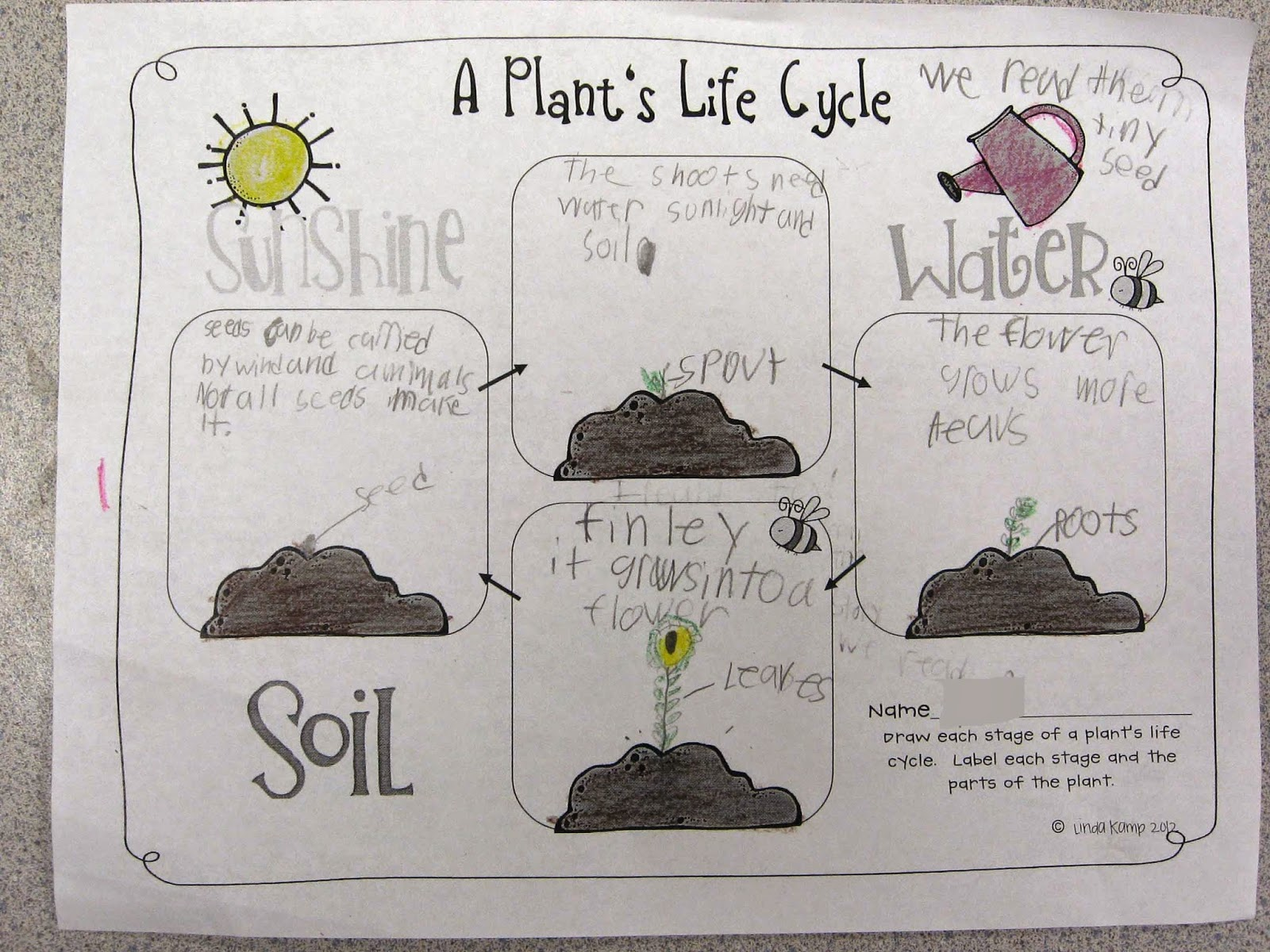 worksheet Plant Cycle Worksheet its plantin time around the kampfire books about plants used thinking maps to label parts of whole categorize we eat and illustrate stages life cycle