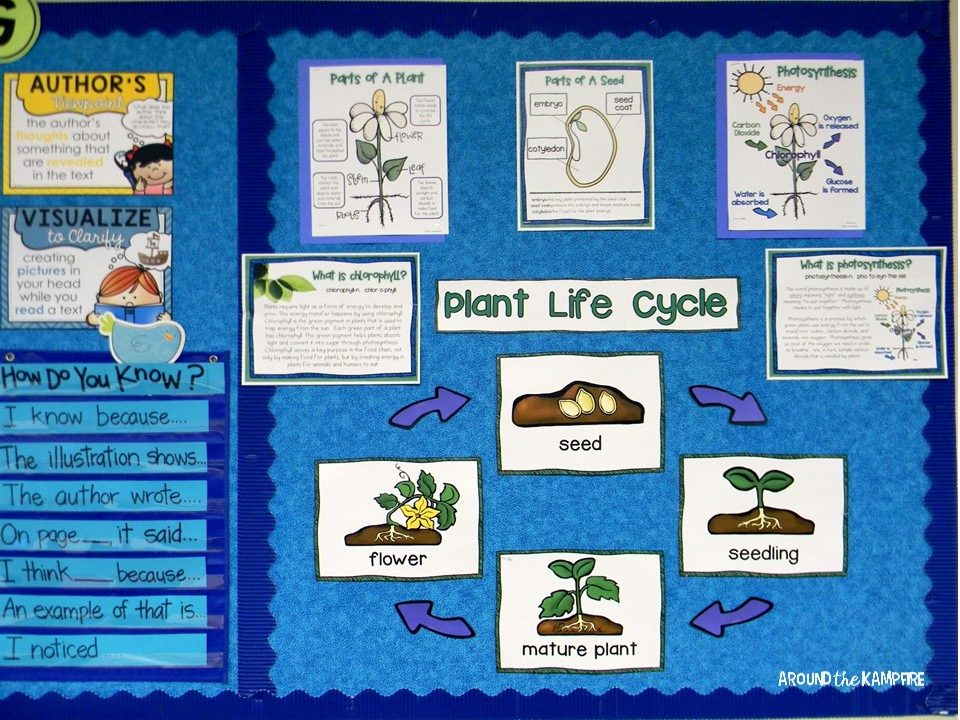 Plant life cycle activities-Teaching charts for parts of a plant, photosynthesis and the plant life cycle. Part of a complete science unit for teaching students about plants.