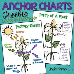 FREE anchor charts for parts of a plant and photosynthesis