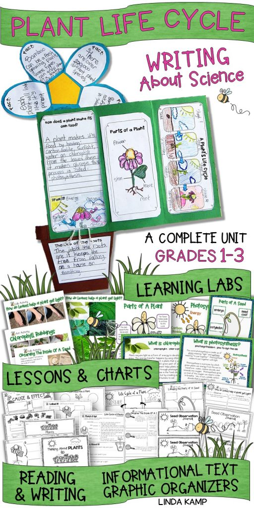 Life cycle of plants complete unit for grades 1-3