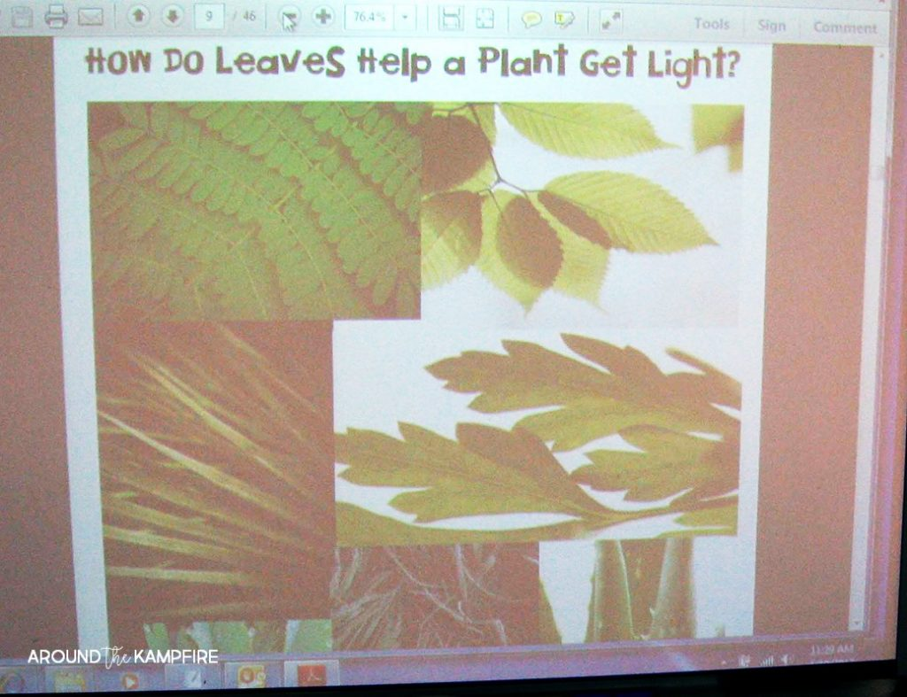 Plant life cycle activities-How do leaves help a plant get light? Mini lesson and science lab for 1st, 2nd, 3rd grade.