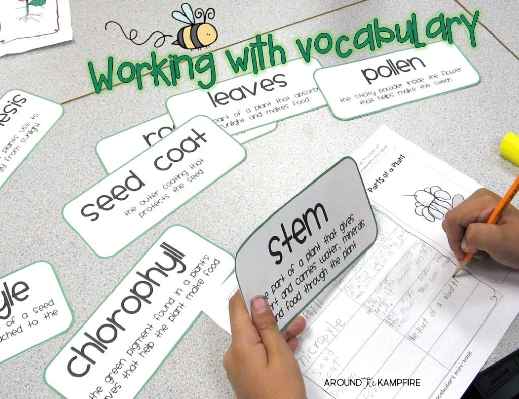 Plant life cycle activities-Working with vocabulary. Part of a complete science unit for teaching the plant life cycle for 1st, 2nd, and 3rd grade.