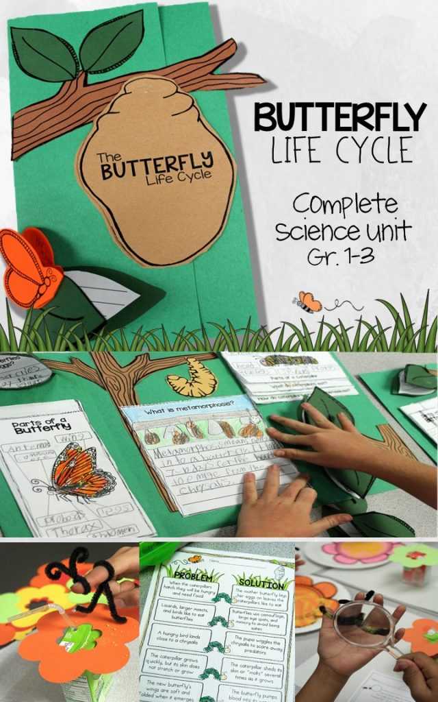 Get your students writing about science with this complete butterfly life cycle unit. Kids get hands-on with the learning labs, literacy centers, and math integration during a life cycle of butterflies unit. With this culminating foldable butterfly lapbook for 1st, 2nd, and 3rd grade students.