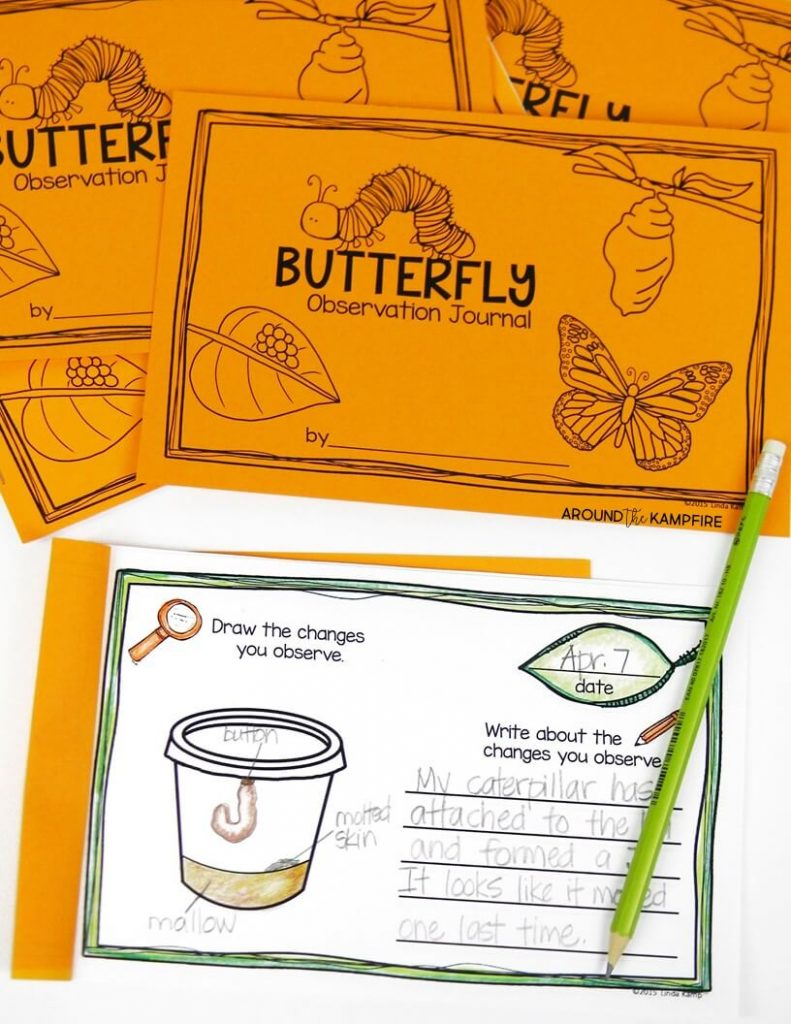 Butterfly observation journal to record the changes during the life cycle of our butterflies.