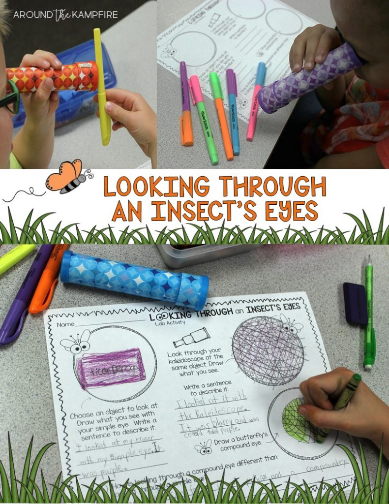 Butterfly life cycle activities-Compound eye science experiment