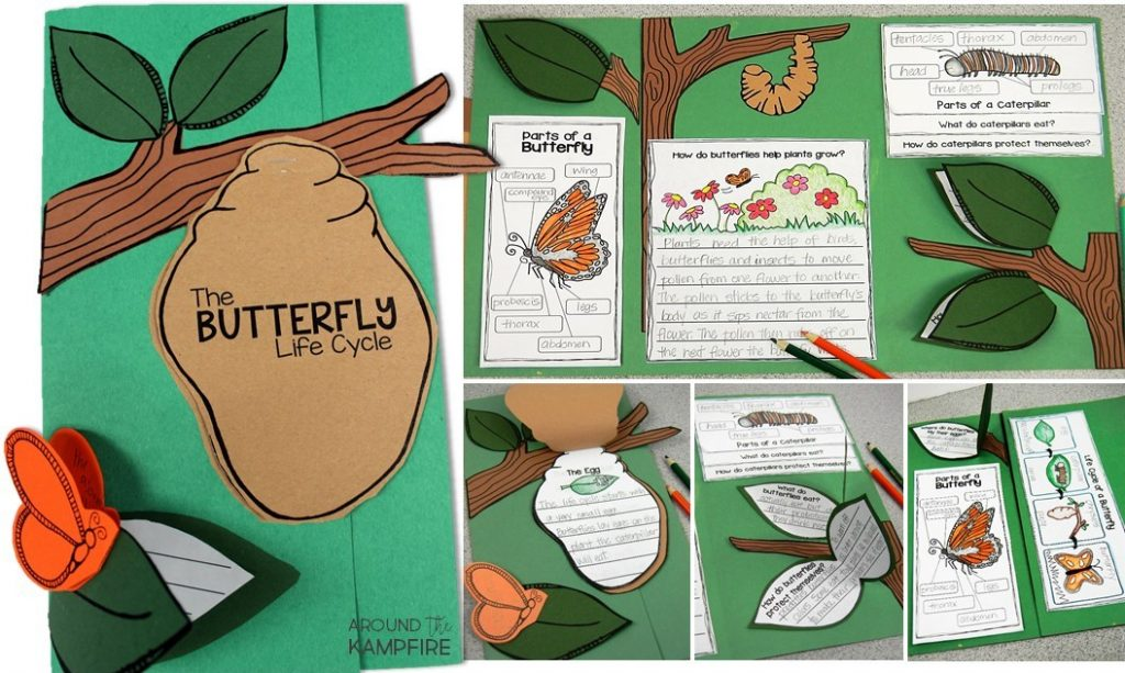 Butterfly life cycle lapbook-a creative way to get kids writing about science and create a learning portfolio.
