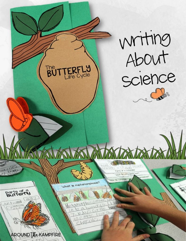 Butterfly life cycle foldable lapbook-Part of a complete science unit Gr. 1-3