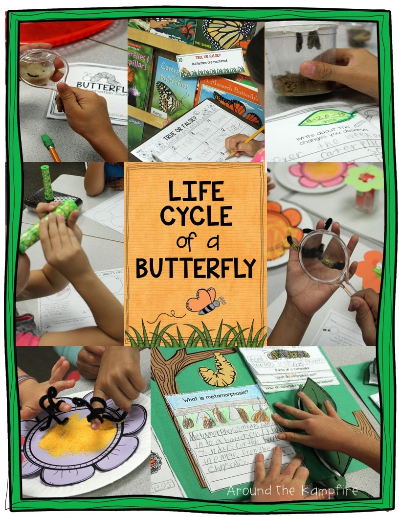 Butterfly Life Cycle Resources & Free Printables