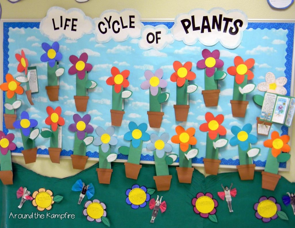 Plant life cycle foldable booklets