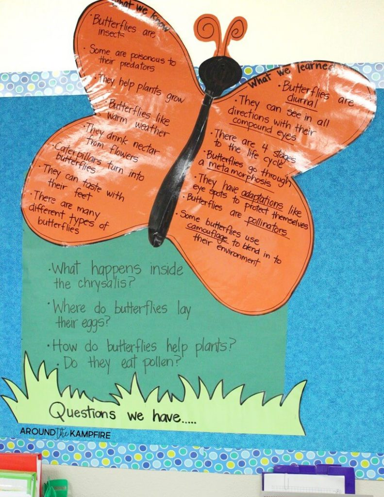 Butterfly life cycle KWL anchor chart.