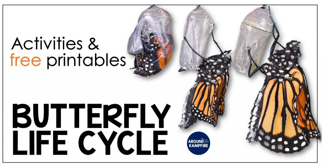 photo relating to Printable Butterflies named Butterfly Lifetime Cycle Products Absolutely free Printables - Over