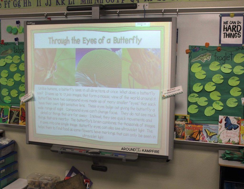 Butterfly life cycle activities-Compound eye lesson and experiment.