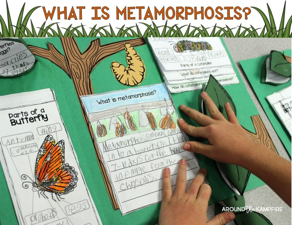 Butterfly life cycle activities-Writing to explain metamorphosis.