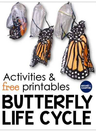 Butterfly life cycle resources and free printables-These creative, hands on activities are ideal for 2nd, 3rd, and 4th grade.
