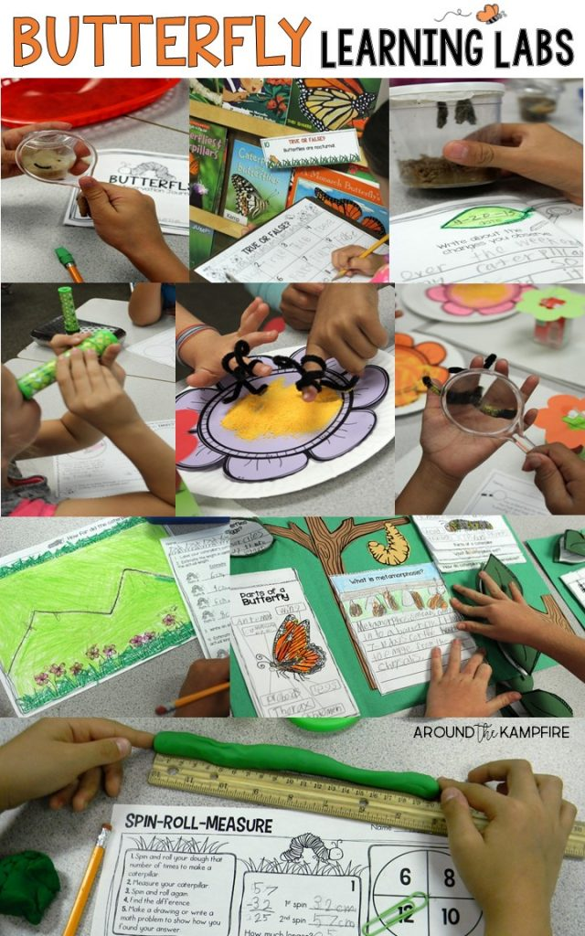 See how we used butterfly learning labs to integrate literacy, writing, and math into our science experiments during a life cycle of butterflies unit with our 1st, 2nd, and 3rd grade students. Butterfly activities | butterfly math