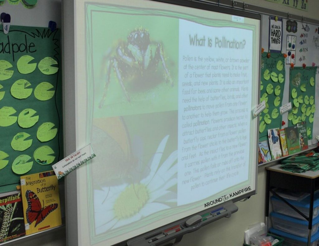 Pollination lesson on how butterflies help plants grow.