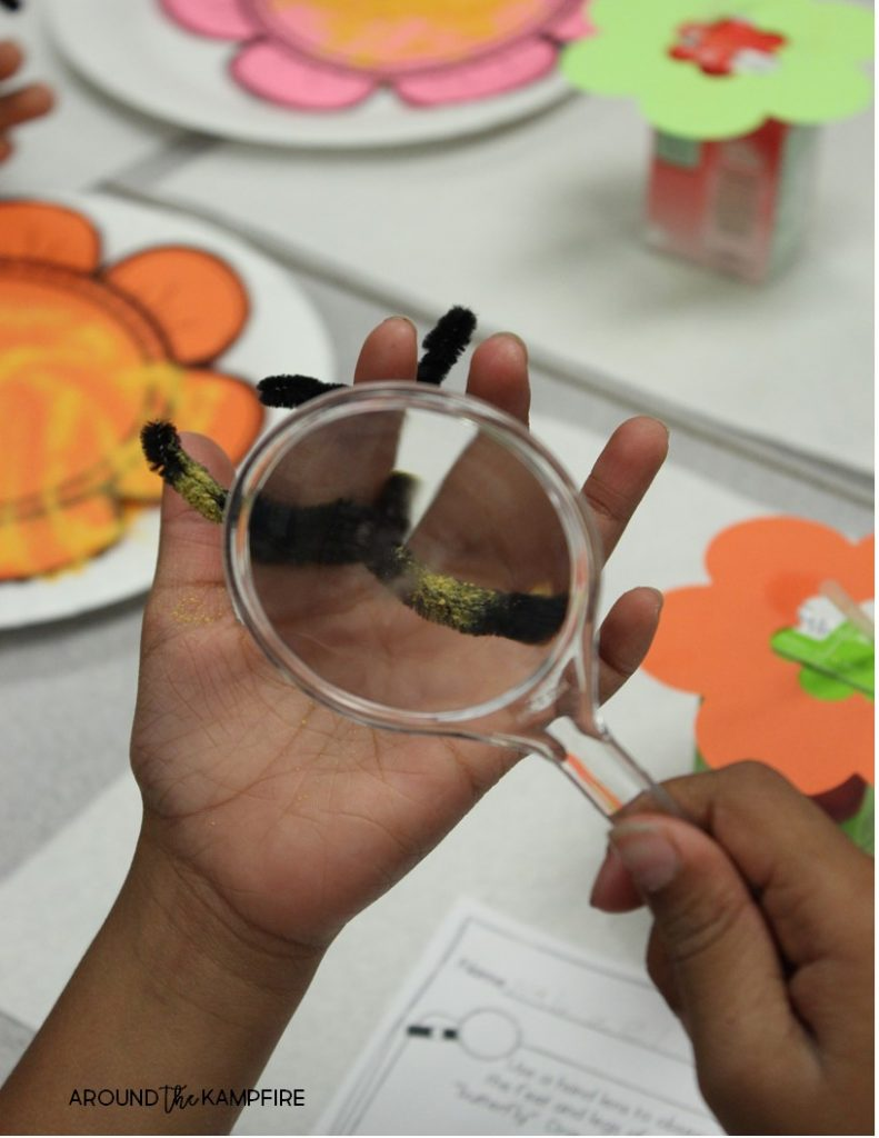 Butterfly life cycle activities-Pollination science experiment during our 2nd grade study of butterflies.