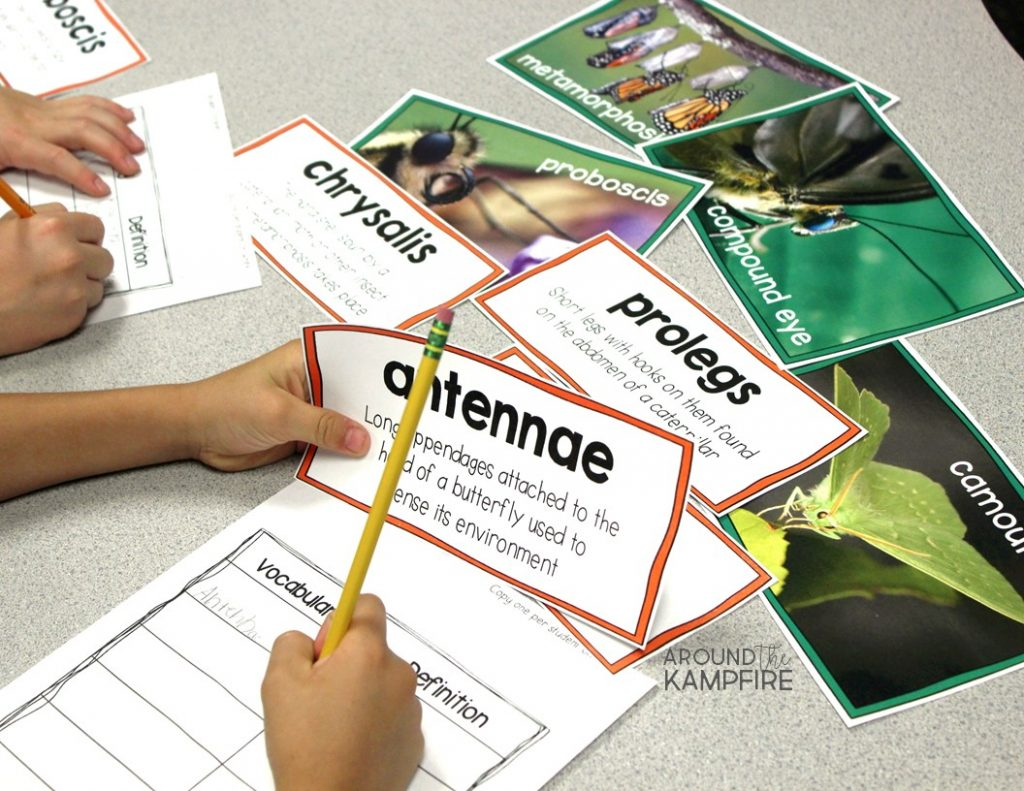 Butterfly vocabulary picture cards.