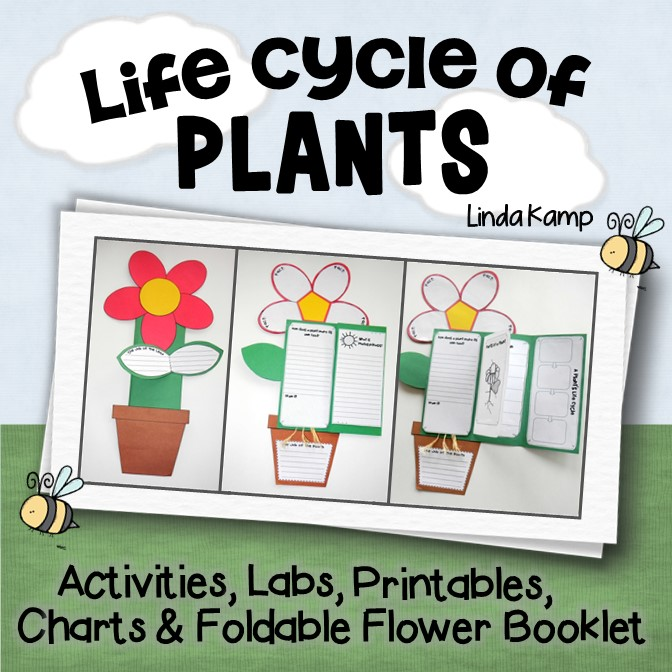 Plant Life Cycle Unit