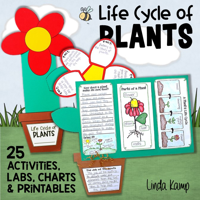 Plant life cycle complete unit for 1st, 2nd, and 3rd grade.