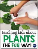 Plant life cycle activities: Find creative, hands-on plant life cycle activities for teaching kids about chlorophyll, pollination, germination, and seed dispersal the fun way! Ideal for 1st, 2nd, and 3rd graders learning about the life cycle of plants.