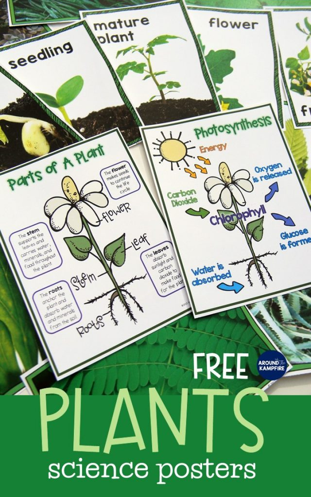 Life cycle of plants activities & FREE science posters.