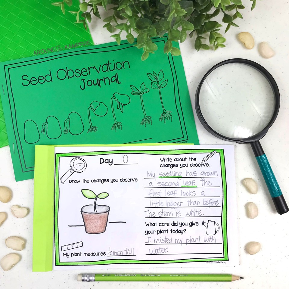 Plant life cycle activities for kids-Seed observation journal.