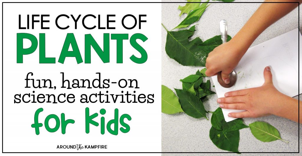 Plant Life Cycle Activities-Fun, Hands-on Science for Kids