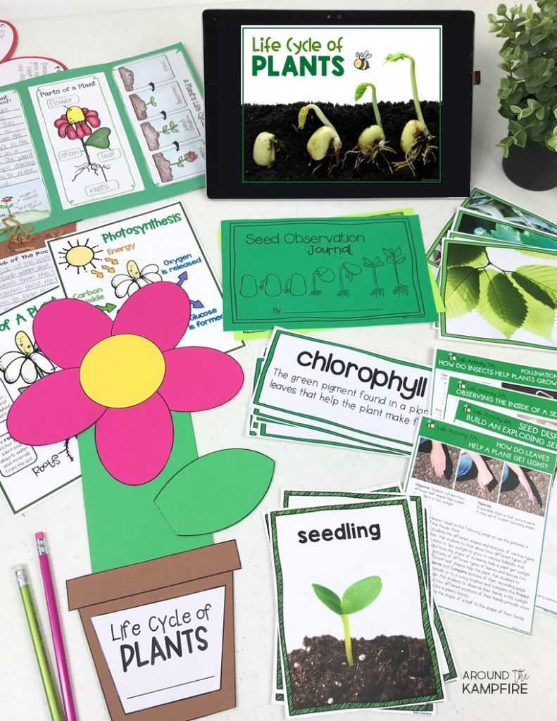 Plant life cycle activities for kids-Complete science teaching unit study for 1st, 2nd, and 3rd grade students.