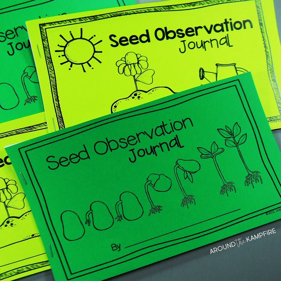 Plant Life Cycle Activities For Kids Teaching Plants The Fun Way Seed Germination Diagram Hands On Science Find Creative