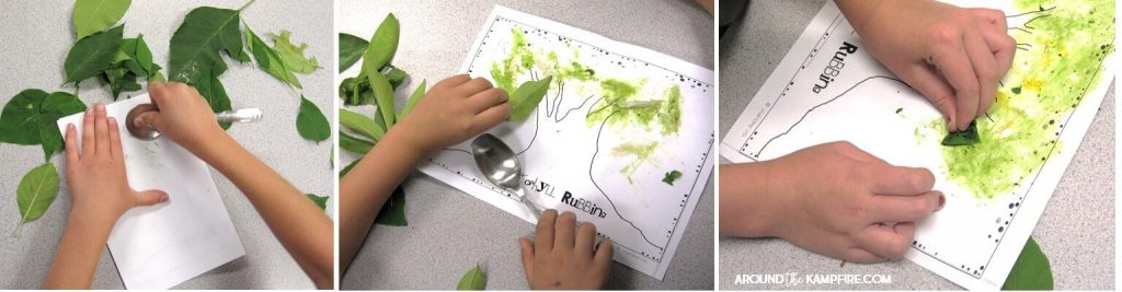 Plant life cycle activities: Hands-on science for kids. Find creative, hands-on ideas for teaching kids about chlorophyll, pollination, germination, and seed dispersal that get students thinking, writing, and having fun! Ideal for 1st, 2nd, and 3rd graders learning about the life cycle of plants