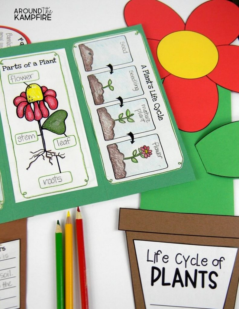 Plant Life Cycle Activities For Kids The Fun Way on Plant Life Cycle Stages