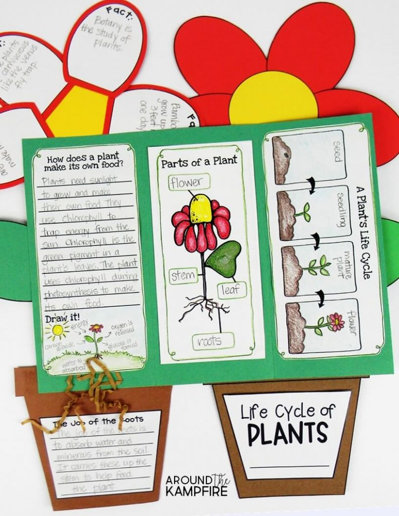 Plant Life Cycle Activities For Kids Teaching Plants The Fun Way Germination Diagram Seed In Hands On Science Find Creative