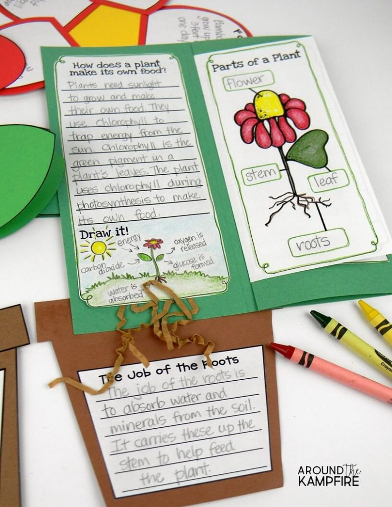 Plant life cycle activities: Hands-on science for kids. Find creative, hands-on ideas for teaching kids about chlorophyll, pollination, germination, and seed dispersal that get students thinking, writing and having fun! Ideal for 1st, 2nd, and 3rd graders learning about the life cycle of plants.