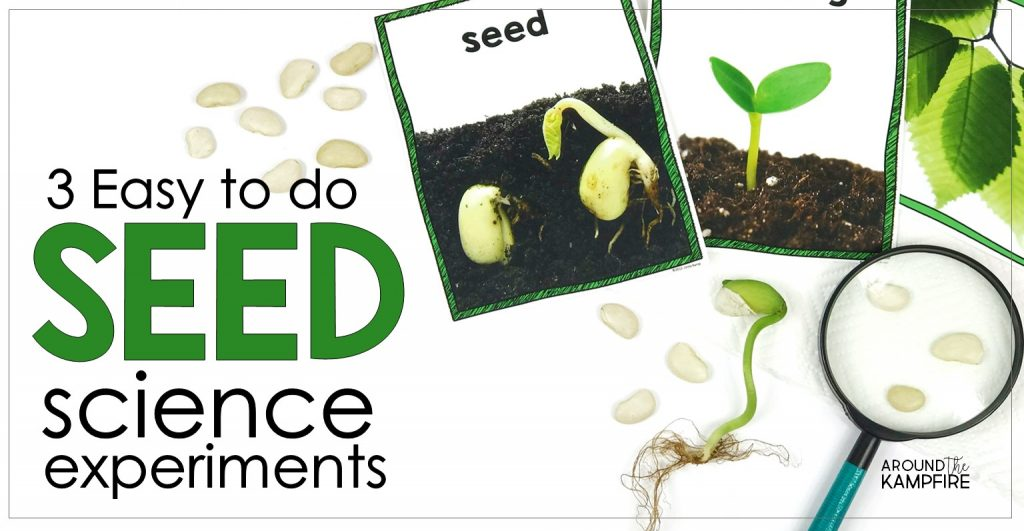 Easy seed science experiments and parts of a seed activities for kids