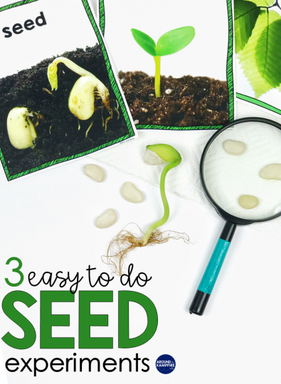 Easy Seed Science Experiments & Parts of a Seed Activities