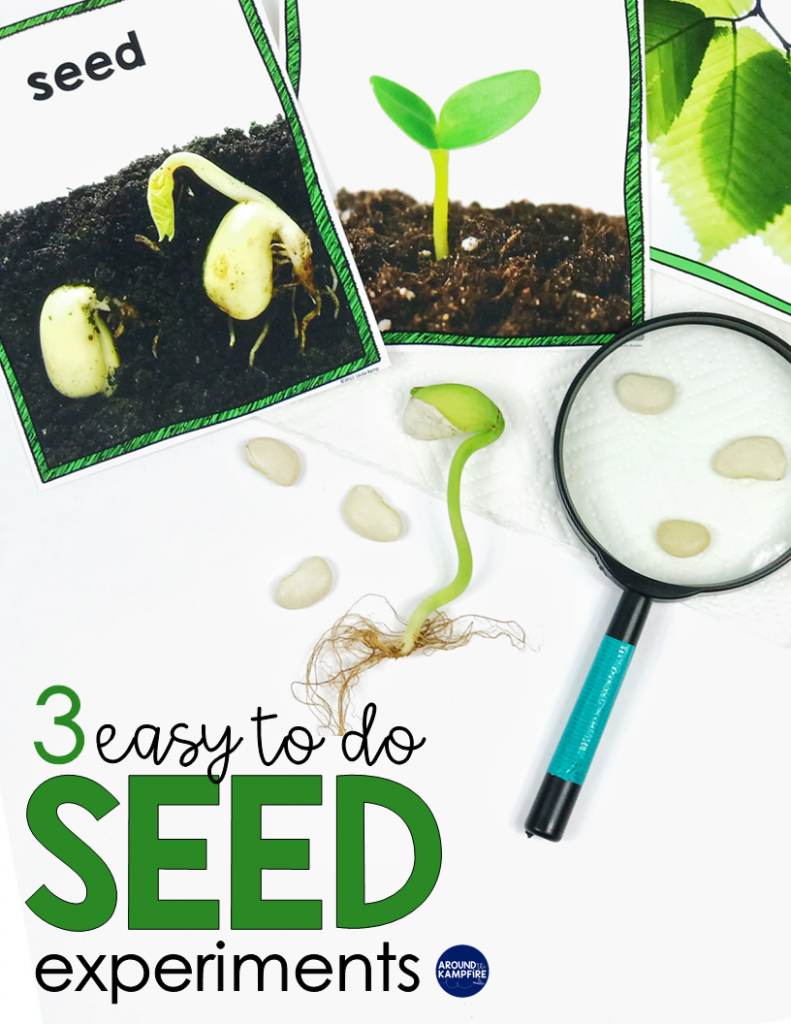 Easy seed science experiments and parts of a seed activities for kids. Simple to do science activities ideal for 1st, 2nd and 3rd graders learning about the life cycle of plants.