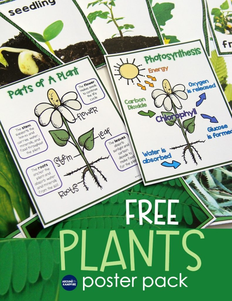 FREE Plant life cycle science posters