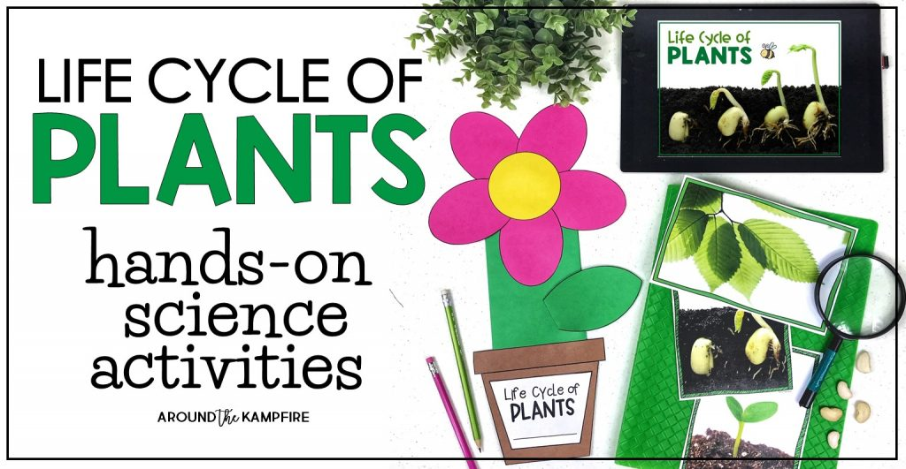 Plant life cycle activities for kids-Hands on science activities perfect for 1st, 2nd, and 3rd grade students to learn about plant needs, adaptations, photosynthesis, pollination and more.