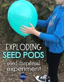 Seed dispersal activity- A fun science experiment and STEM challenge for 1st, 2nd, and 3rd graders to learn about exploding seed pods while studying the plant life cycle. Students build a model of this plant adaptation and explore how seeds travel.
