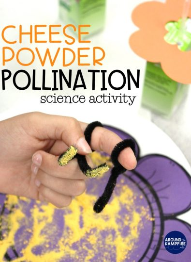 Fun pollination science activity using macaroni & cheese powder and juice boxes for first, 2nd and 3rd grade students learning about the butterfly life cycle.