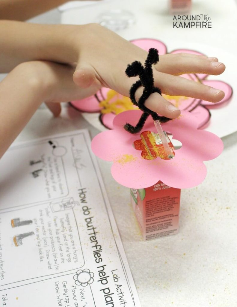 Fun pollination science activity using mac & cheese powder for first, 2nd and 3rd grade students learning about the butterfly life cycle.
