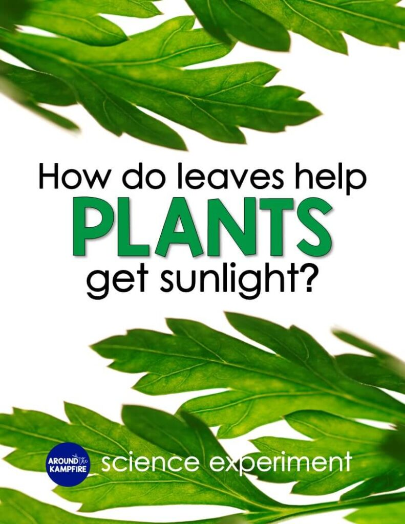 Plants needs science activity & experiment