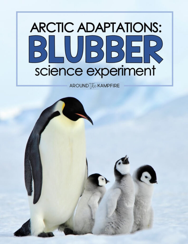 Arctic Animal Adaptations Blubber Science Experiment for Kids