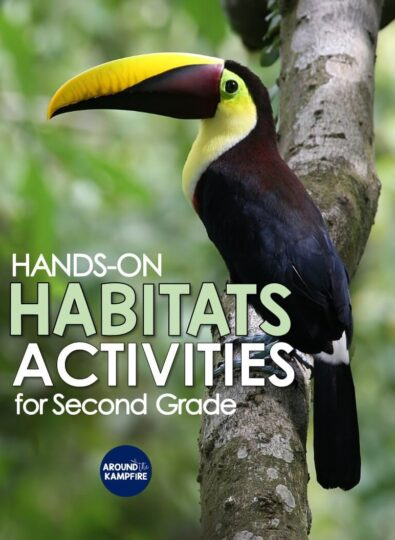 Habitat activities for second grade