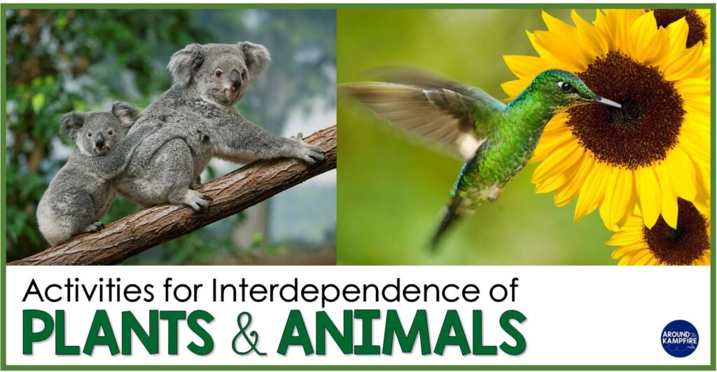 Basic needs of plants and animals and their interdependence article