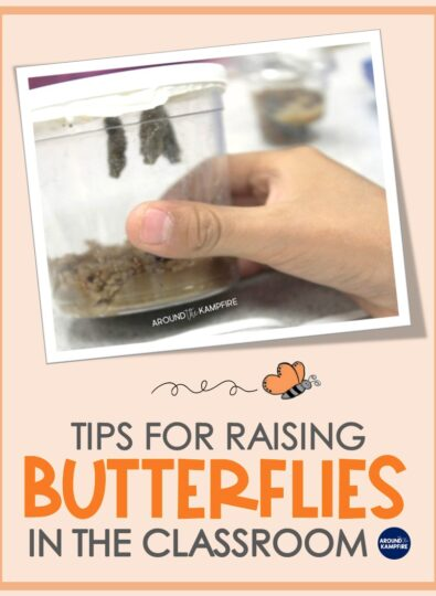 How To Raise Butterflies in the Classroom
