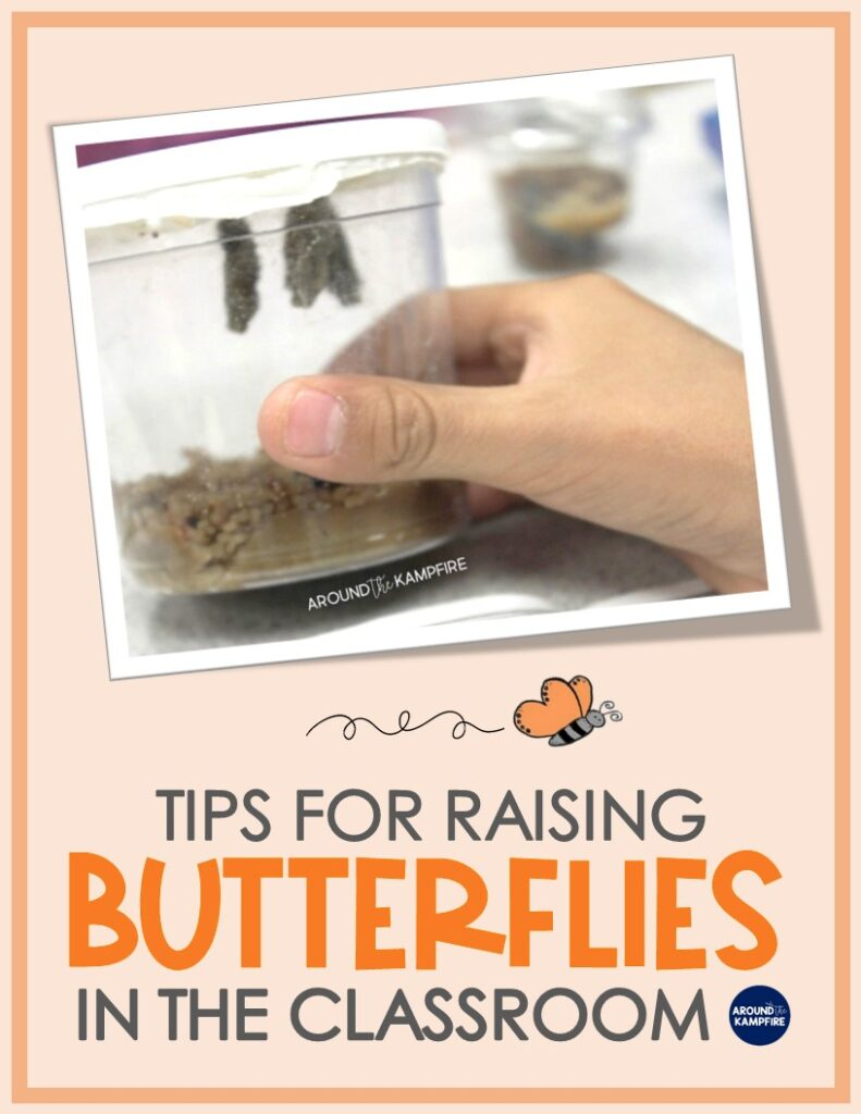 Tips for raising butterflies in the classroom article