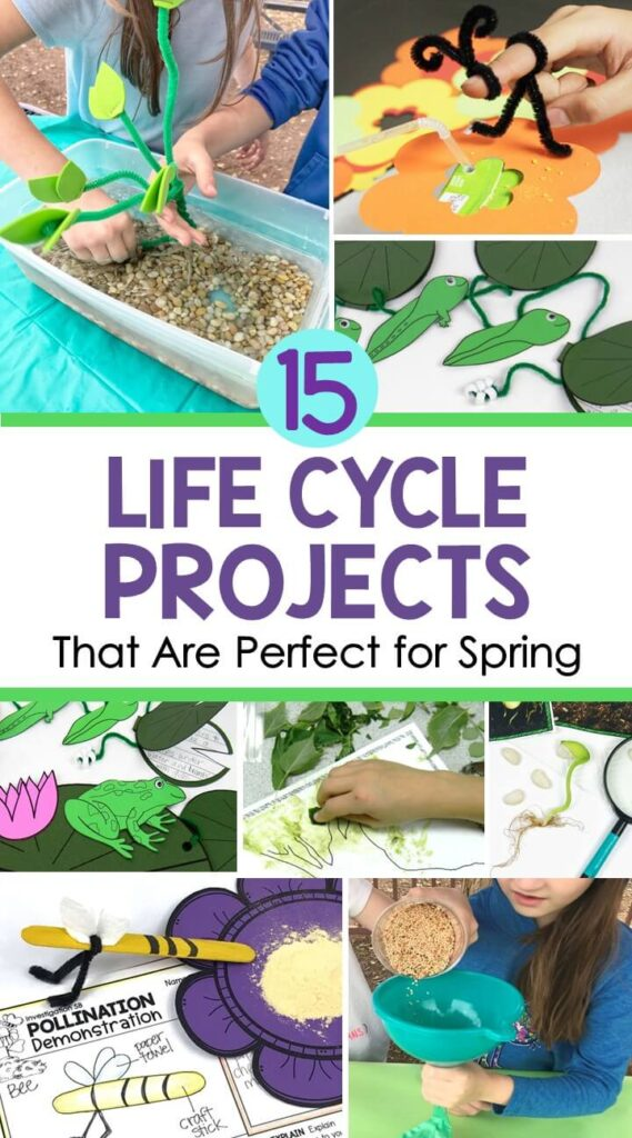 Life Cycle Projects for frog, butterfly and plant life cycles